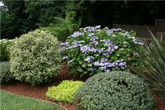 Pruning shrubs into different layers creates an interesting bed