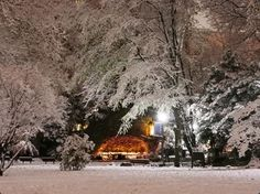University of Notre Dame, IN, USA / The Grotto in Winter