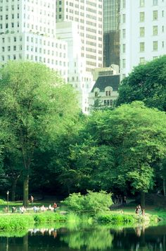 NYC. Summer in Central Park