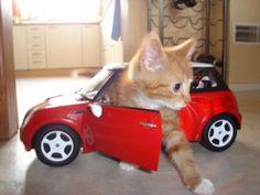 Kitty Car!