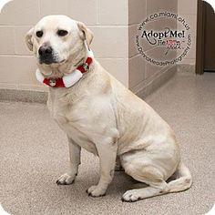 URGENT!  I am at a kill shelter in Troy, OH - Labrador Retriever Mix. Meet Mia, a dog for adoption. http://www.adoptapet.com/pet/11994530-troy-ohio-labrador-retriever-mix