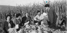 Demetrius Psarras junto com amigos numa plantação de milho