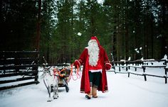 Santa Claus prepares a reindeer and sled in Santa Park near Rovaniemi, Finnish Lapland, on December 15, 2011.