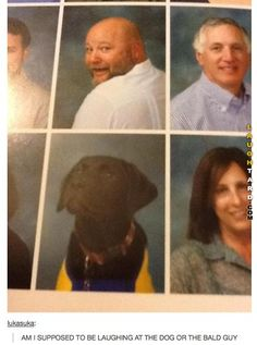 Dog or the bald guy