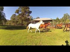 Horse riding, petting zoo, swimming, bush walking, motocross and lots of family fun. Accommodation and agistment available. Farm Stay, Zoo Animals, Horse Riding, Business Opportunities, Horses, Fun, Horse, Words, Horseback Riding