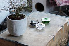 Oravanpesä | Pagodipuu Sophora prostrata 'Little Baby' ja Halo design Harri Koskinen for Iittala