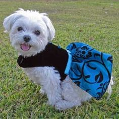 Family on pinterest dog dresses yorkie puppy and pet clothes