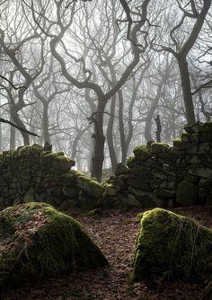 Ancient Fence, Derbyshire, England