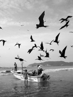 Puerto Lopez. #fishermen #fish #seagulls #beaches   https://www.pinterest.com/pin/80924124532843094/