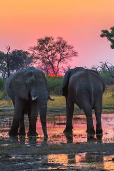 """African Elephants At Sunset"" by Graham Prentice"