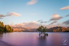 Lake-wanaka-tree-otago