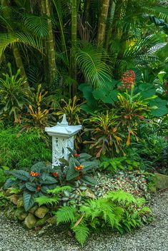 All that is required tropical & subtropical grow and garden web site for the new to Tropical garden, beginner grower and get good at tropical gardens backyard Tropical Garden Design, Tropical Backyard, Tropical Landscaping, Garden Landscape Design, Tropical Plants, Backyard Landscaping, Tropical Gardens, Landscaping Borders, Exotic Plants