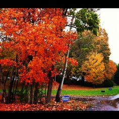 Picture taken in Riner, VA