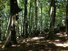 Inside the Beech forest on Mount Cimini.