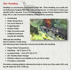 Shedding Turtle Care, Aquatic Turtles, Ponds, Shed, Book, Veterinary Medicine, Sea Turtles, Books, Sheds