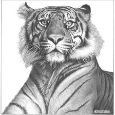 Realistic Baby Animals - Google Search | Art | Pinterest | Drawings Of Birds Tiger Drawing And ...
