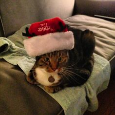 Staff member Emily's cat getting ready for Text Santa!