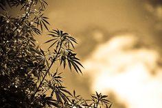 #420 #marijuana #joint #laughing #stoned    Like, repin and follow! Peace!