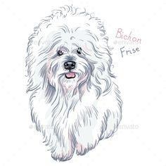 Dog Bichon Frise Breed