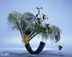 love this creative mix of Fennel w/flower vines in a Blue sculpted/modern ceramic vase