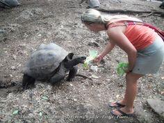 feeding Tortoises in Zanzibar