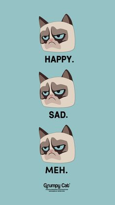Source by lisavanbroek videos wallpaper cat cat memes cat videos cat memes cat quotes cats cats pictures cats videos Funny Cat Wallpaper, Kawaii Wallpaper, Cute Wallpaper Backgrounds, Cute Wallpapers, Grumpy Cat Cartoon, Kitten Cartoon, Pop Cat, Cat Background, Cute Animal Drawings