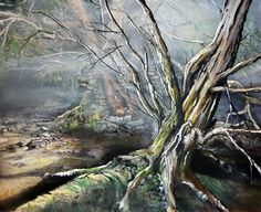Ancient forest near Burrator, Dartmoor.
