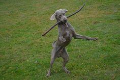 Gårdstunet Hundepensjonat: Morsom dag med særdeles lekne hunder på tunet!