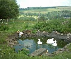 Backyard duck pond created in a weekend could be finished for Design of pond embankment