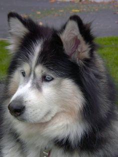 Alaskan Husky www.SELLaBIZ.gr ΠΩΛΗΣΕΙΣ ΕΠΙΧΕΙΡΗΣΕΩΝ ΔΩΡΕΑΝ ΑΓΓΕΛΙΕΣ ΠΩΛΗΣΗΣ ΕΠΙΧΕΙΡΗΣΗΣ BUSINESS FOR SALE FREE OF CHARGE PUBLICATION