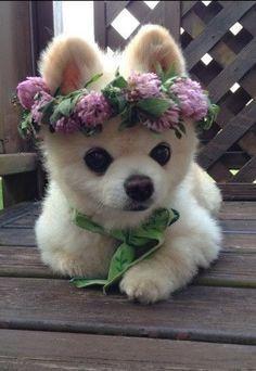 Cuitest dog ever! Such a princess she is...with her crown of flowers