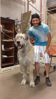 Irish Wolfhound at Home Depot = Massive Dog