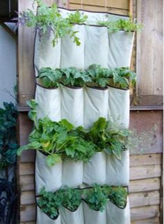 LOW-COST IDEA? This One's a Shoe-In If you're looking to grow a few herbs or veggies but don't want a full-on garden, a simple plastic shoe organizer ($20) lets you stock up on fresh greens while saving space — and cash. Without drain holes, the soil may tend to stay moist, so watch out for overwatering.