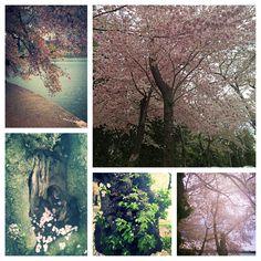 DC Spring