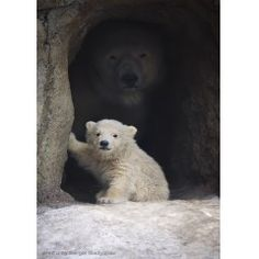 Wow, look at moma bear in the background....Cool!