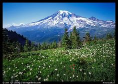 This photographer takes some of the most beautiful pictures!  Mt. Rainier, WA