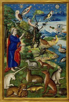 """medieval: """" Creation of the birds and the animals. Medieval Life, Medieval Art, Medieval Manuscript, Illuminated Manuscript, Medieval Tapestry, Medieval Paintings, Biblical Art, Book Of Hours, Adam And Eve"""