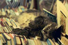Smart cat nap.