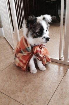 This is what ease the puppy in clothes http://ift.tt/2oWJQYB