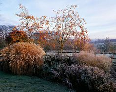 Pettifers in Winter Colourful winter garden with formal parterre softened by seedheads and berries. Photographed by Clive Nichols.