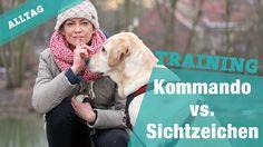 Kommando vs. Sichtzeichen im Hundetraining – Der Test | Hundekanal