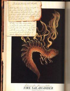 Salamander - Spiderwick Chronicles Wiki