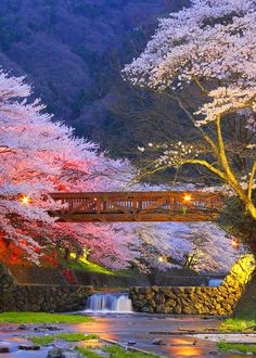 The most beautiful place in Kyoto - a popular city part of the island of Honshu in Japan.