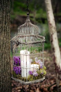 Candles in the bird cage - AVSO.ORG