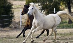 List of Weird Scholarships (Arabian Horse Riders Assoc. is one such sponsor per article in June, 2010 article at Womans Day.com) image via Photo courtesy Shutterstock.
