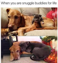 Funny Animal Pictures 26 Pics