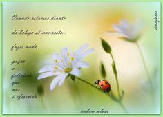 140 Melhores Imagens De Rubem Alves Amazing Quotes Awesome Quotes