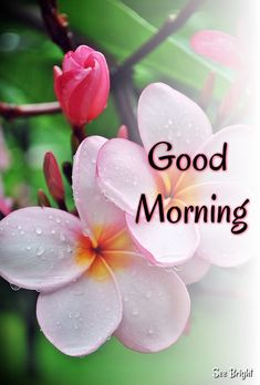 Good Morning Wishes Friends, Good Morning Dear Friend, Good Morning Friday, Happy Morning, Good Morning Picture, Good Morning Flowers, Good Morning Good Night, Morning Pictures, Good Morning Images
