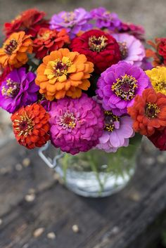 Zinnia 'Sprite Mix'. Find out how to grow your own cut flowers at http://www.gardenersworld.com/how-to/projects/seeds-and-bulbs/how-to-raise-cut-flowers-from-seed/3720.html. Photo by Paul Debois