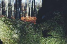 See more of wk29's VSCO Grid. #vscocam #autumn #trees